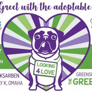 Meet & Greet with Northern Plains Boxer Rescue!